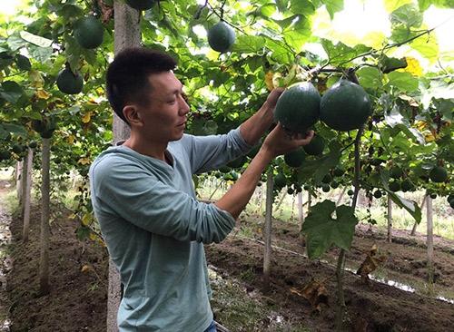 瓜蒌种植技术